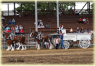 First place four horse hitch